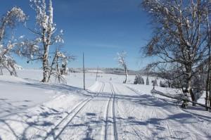 Krušnohorská lyžařská magistrála u Hřebečné. Foto: Jiří Málek