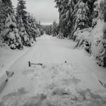 Okruh Karlova běhu/Šlajsna 13.1.2021