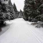 bucinska_cesta_20210412 (2)
