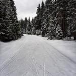 bucinska_cesta_20210412 (3)